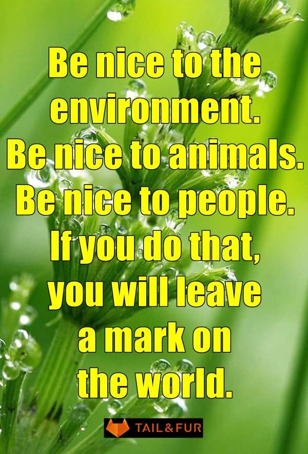 Heart Touching Sayings And Slogans On Save Environment