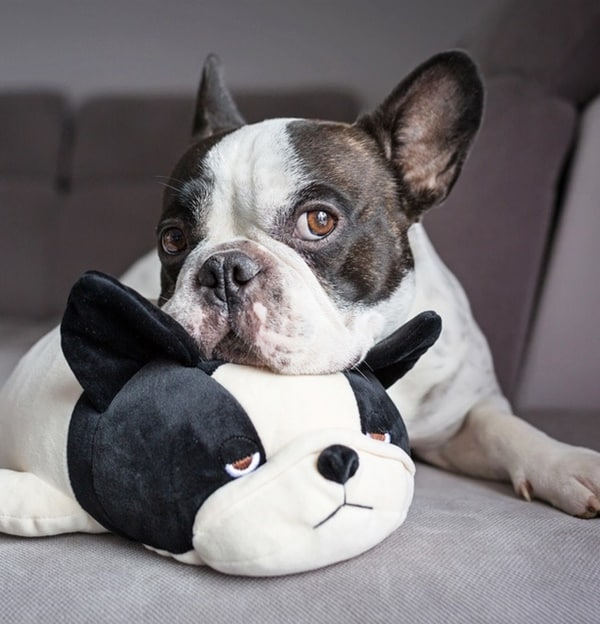 Toys Which Occupy Your Dog For Hours