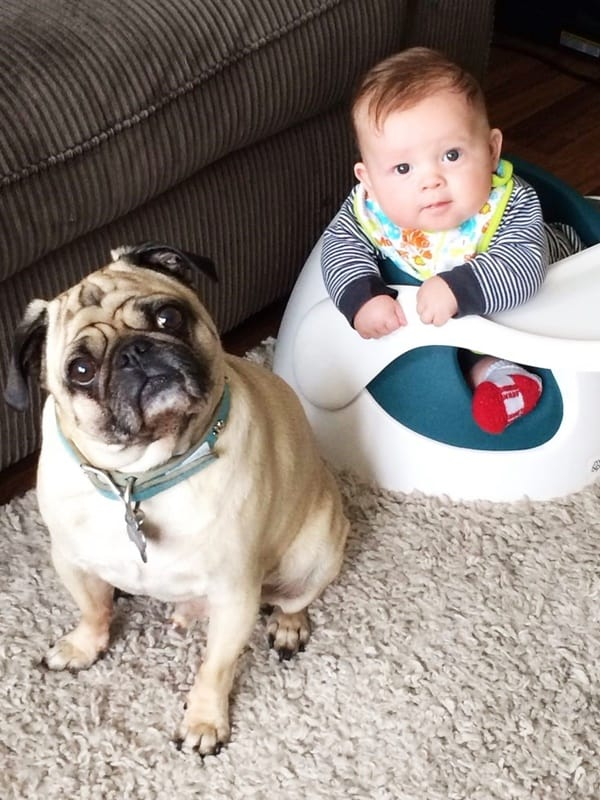 Best Family Dogs for Kids