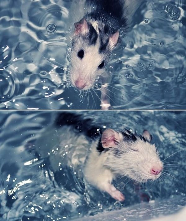 Cute Pictures Of Animals Floating On Water
