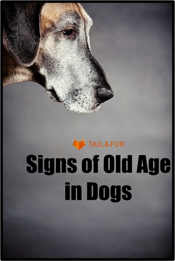 Signs of Old Age in Dogs