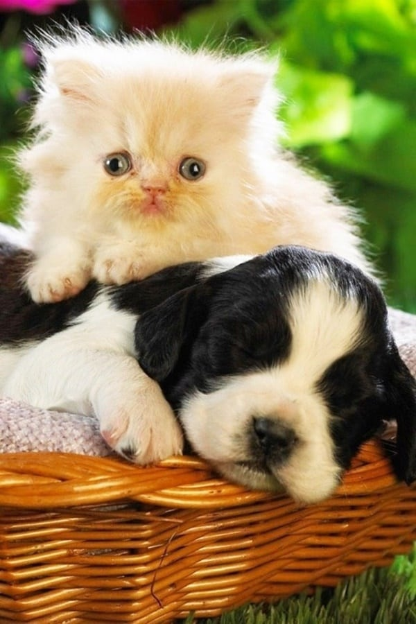 Quick Cat And Dog Games To Maintain A Healthy Relation