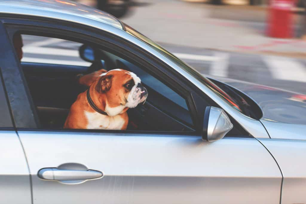 car travel with dog