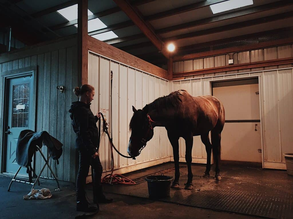 stable care for horses