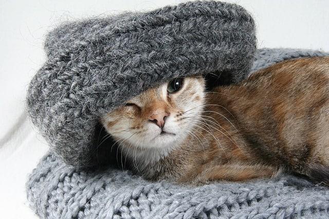 kitten in bed