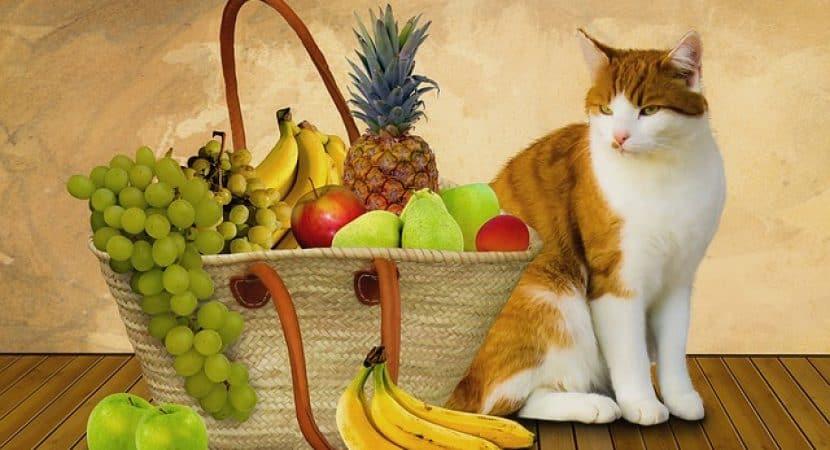 cat banana