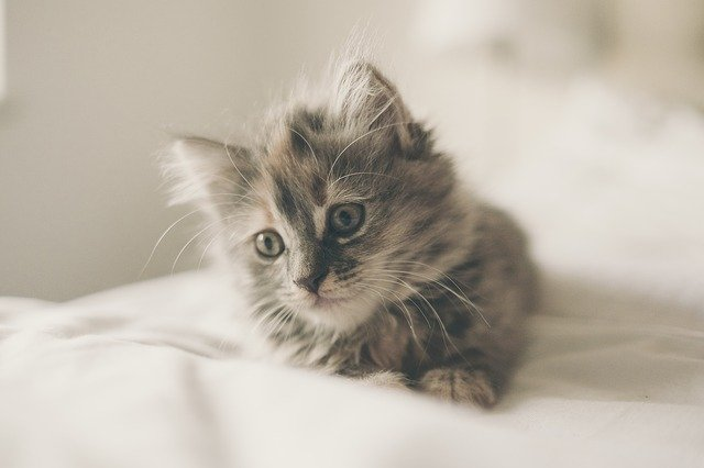 preparing for a new kitten