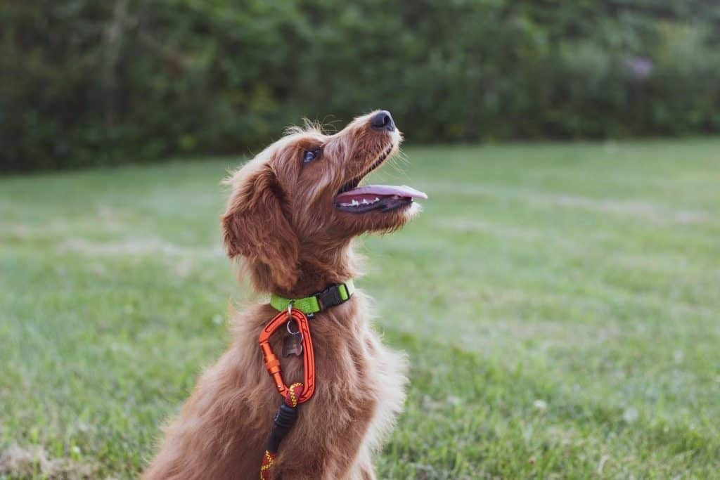 wireless dog collar