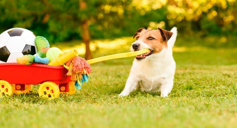 Cheap Dog Care Products
