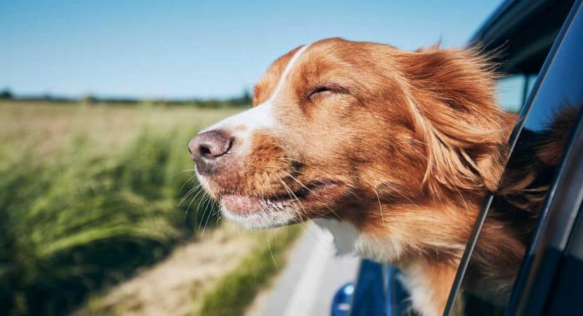 Tips While Traveling With Dogs