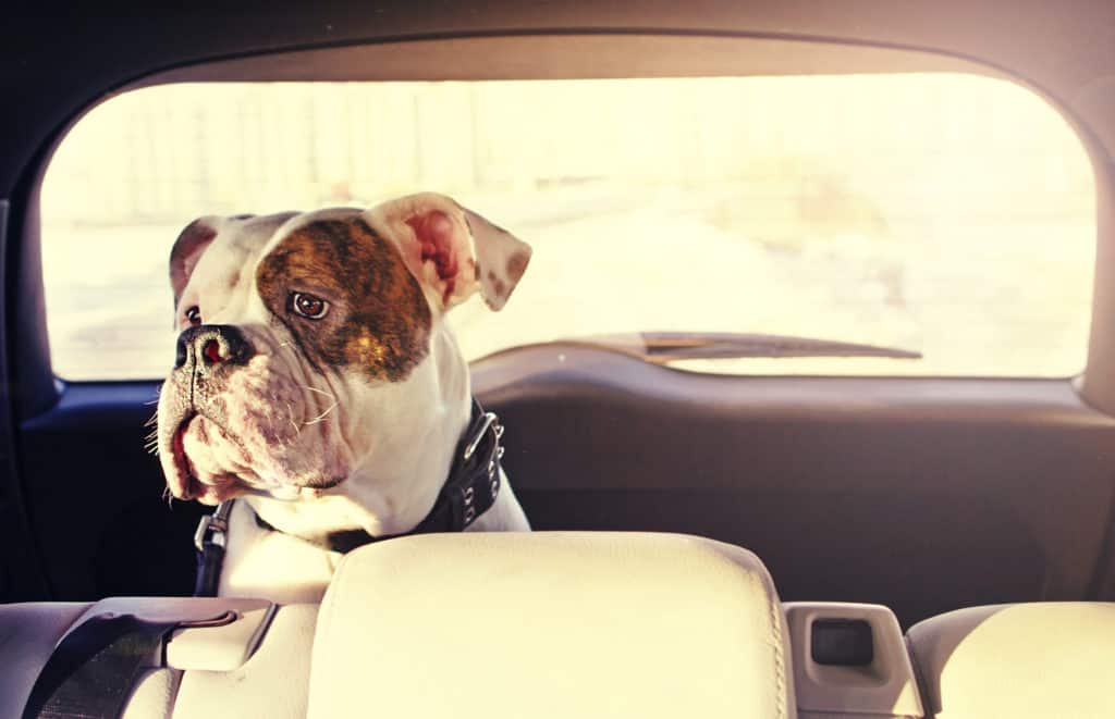 Is traveling stressful for dogs?