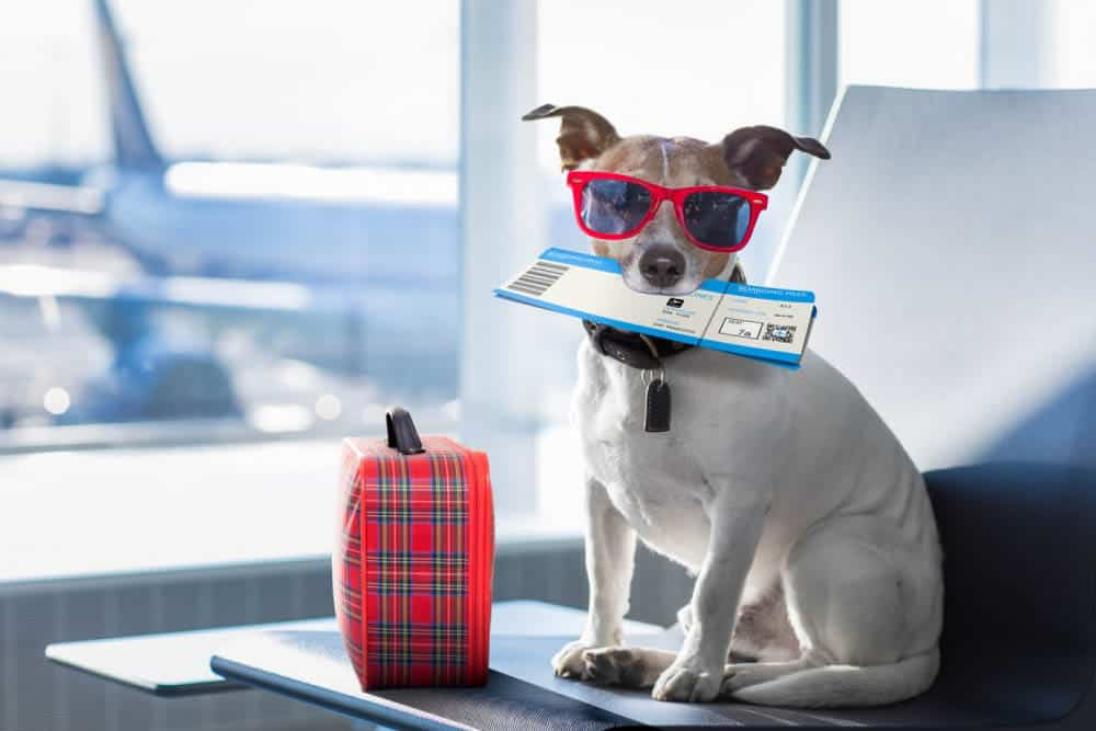 how to prepare dog for traveling?