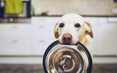 best dog food to prevent scooting