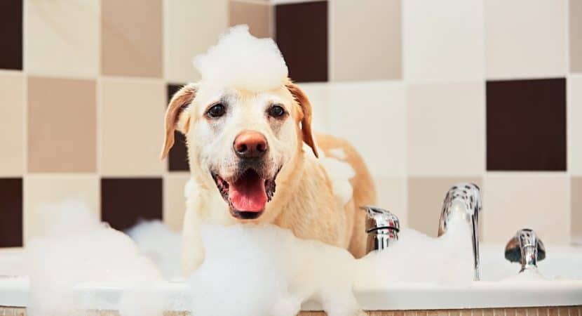 tropiclean dog shampoo review